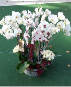 20 Adet Orkide