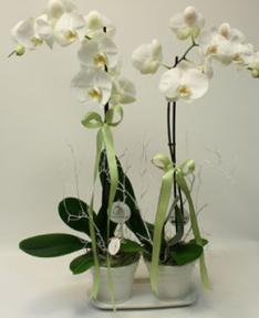 orkidelerin şık seramikle uyumu