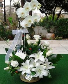 Orkideli arajman